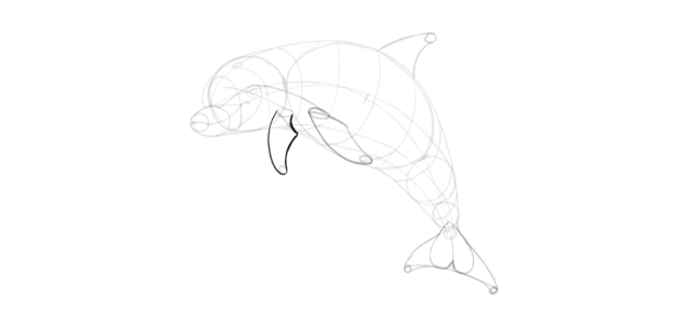 dolphin flippers how to draw