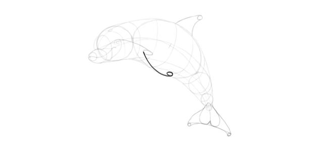 dolphin flipper sketch