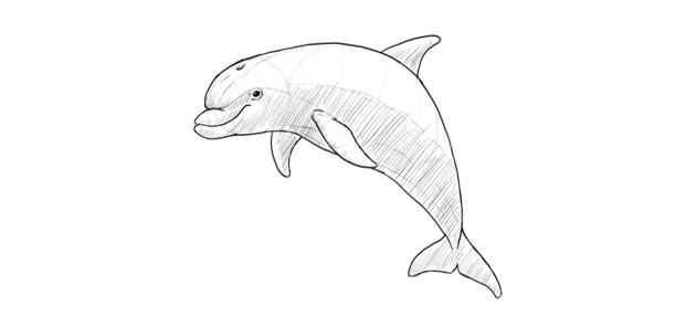 dolphin basic shading