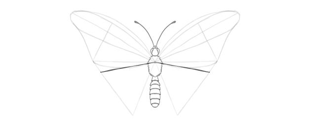 butterfly lower wing shape