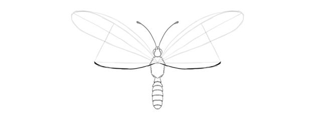 butterfly upper wing inner margin