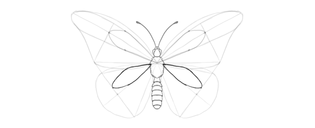 butterfly lower wing discal cell how to draw