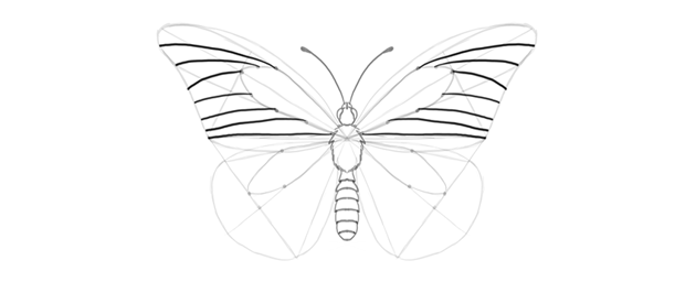 butterfly upper wing cells
