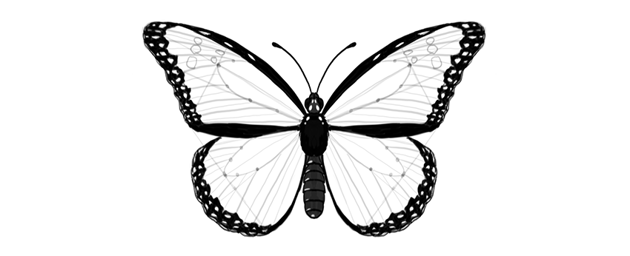 butterfly outer margins darkened