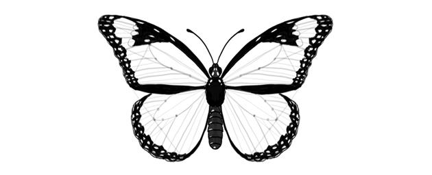 butterfly costal markings