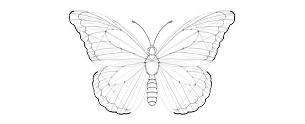 butterfly outer margin edge
