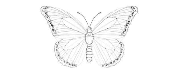 butterfly wing outer margin markings