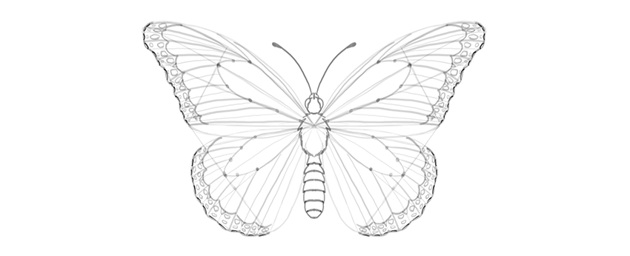 butterfly wing outer edge ragged