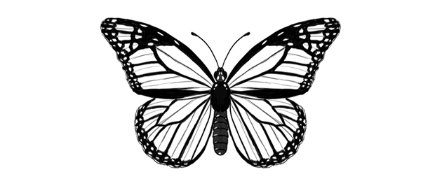 how to draw butterfly step by step from scratch