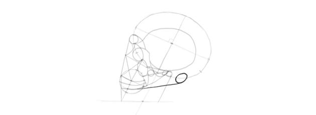 drawing skull back of the skull