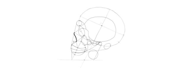 drawing skull nose shape