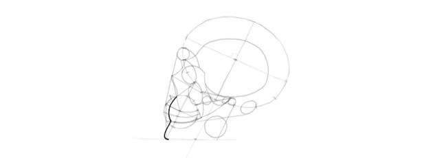 drawing skull teeth