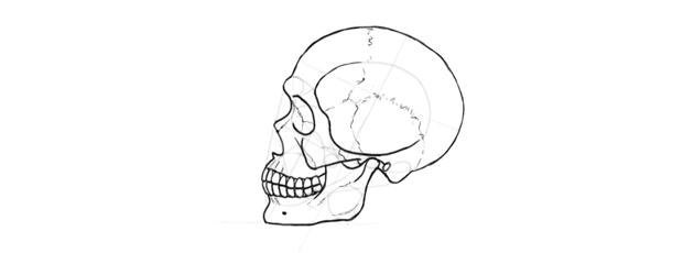 drawing skull seams