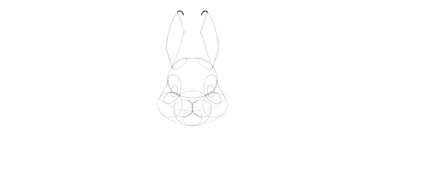 bunny ears rounded