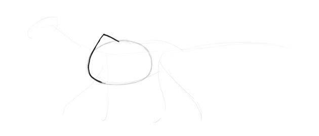 dragon shoulder blades
