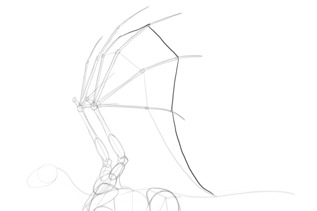 how to draw dragon wing membrane