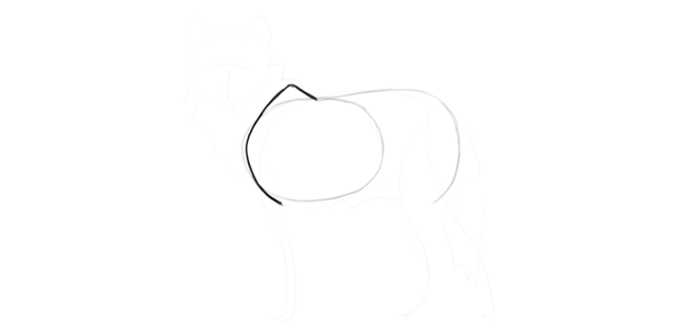 wolf drawing shoulders