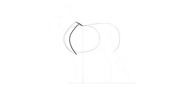 wolf drawing scapula