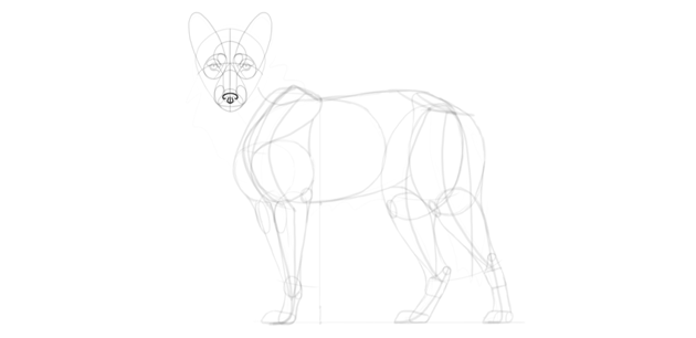 wolf drawing nose shape