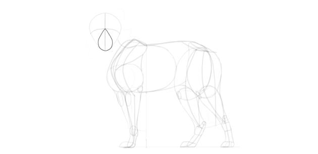 wolf drawing muzzle