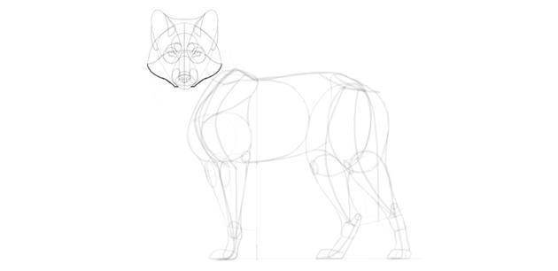 wolf drawing cheekmane