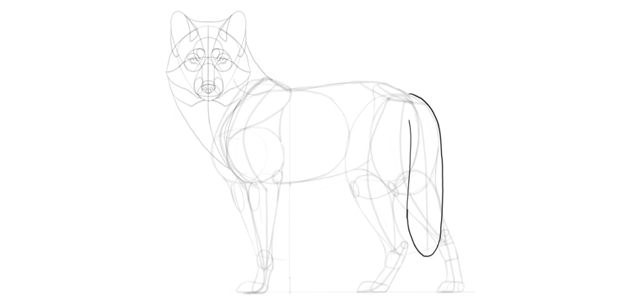 wolf drawing tail fur