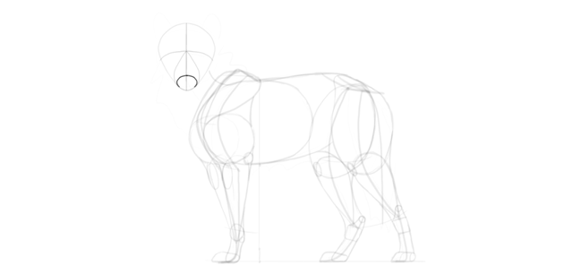 wolf drawing muzzle front