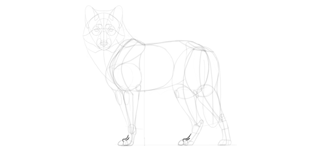 wolf drawing top paws