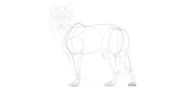 wolf drawing paw pads in perspective