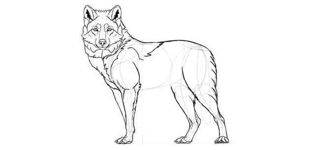 wolf drawing thigh fur
