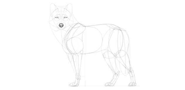 wolf drawing eyes details