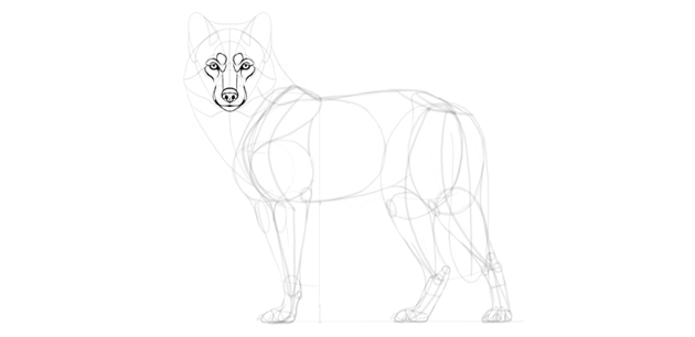 wolf drawing muzzle details