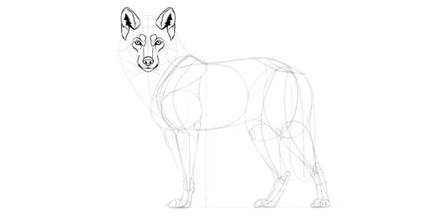 wolf drawing ears fur