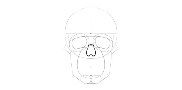 human skull nose detailed shape