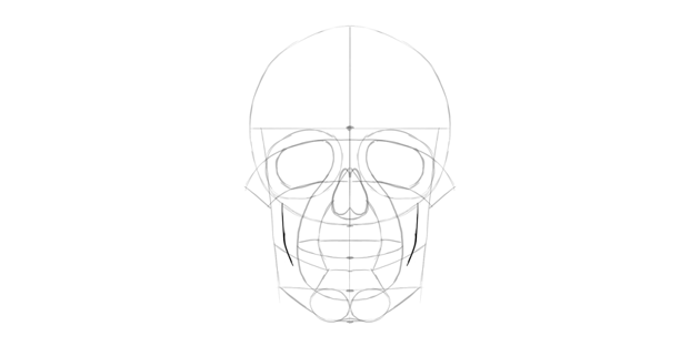 human skull lower jaw detail