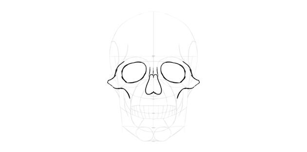 human skull nose outline