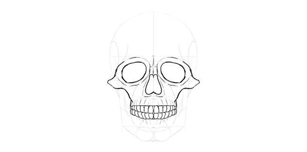 human skull teeth detail
