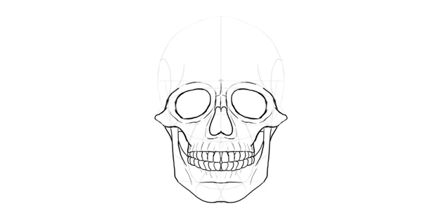 human skull lower jaw outline