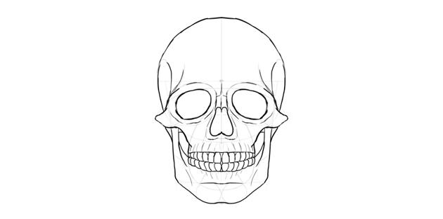 human skull cranium outline