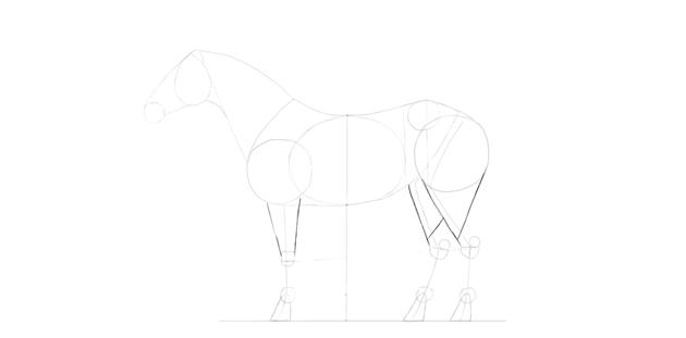 horse drawing foerarm calf