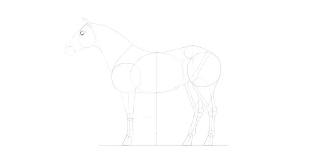 horse drawing eye