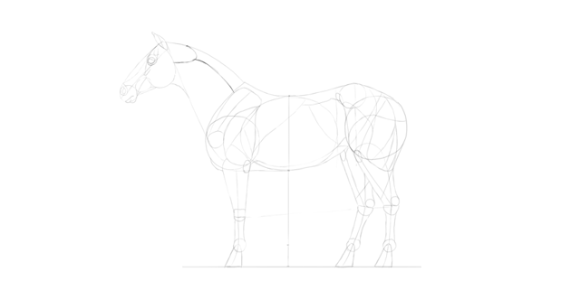 horse drawing neck muscle long