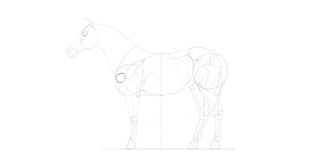 horse drawing shoulder bone