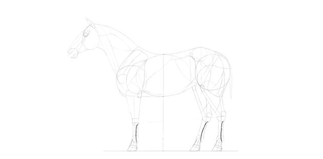 horse drawing legs bones