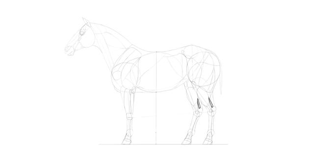 horse drawing tendons