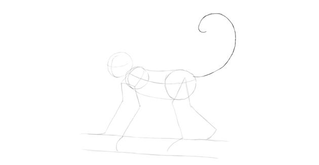 monkey drawing tail shape