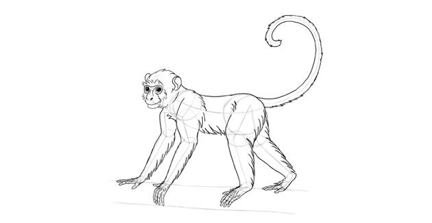 monkey drawing body fur
