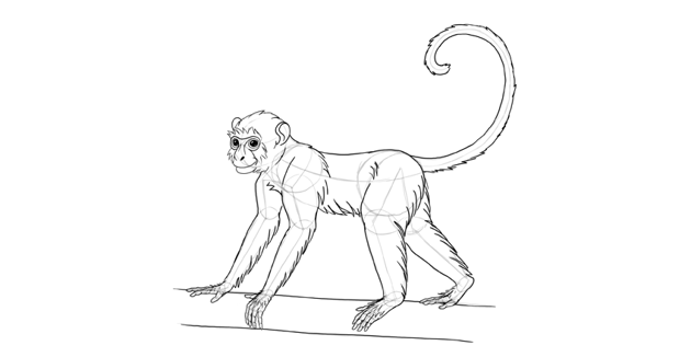 monkey drawing branch outlined