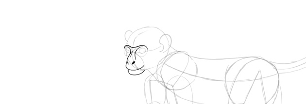 monkey drawing face detailed