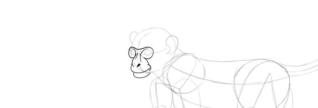 monkey drawing smile detailed